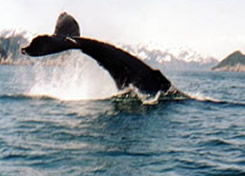 Enjoy the real Alaska - you are likely to see whales, seals, sealions, otters and many more species.